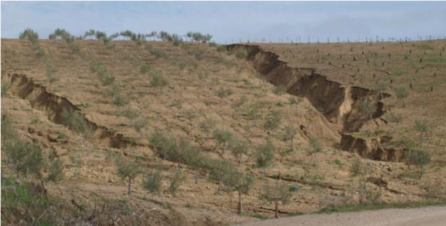 El-20-del-paisaje-espanol-ya-se-ha-desertificado_image_380.png