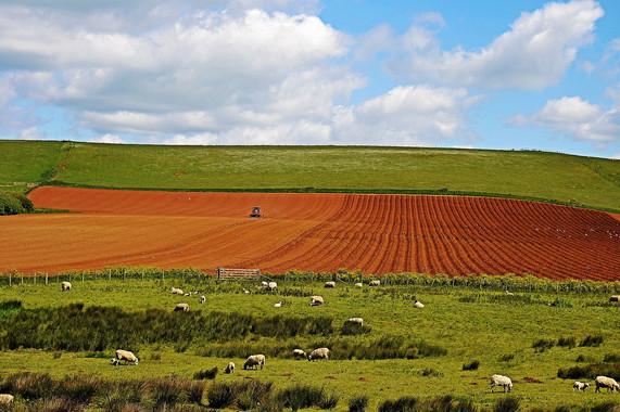 el-precio-de-reducir-las-emisiones-de-gases-de-efecto-invernadero-en-la-agricultura_image_380
