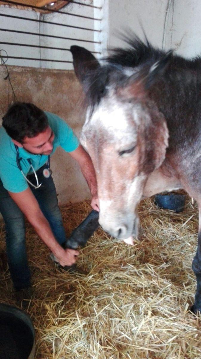 CYD Santa María. Vota para que reciban 1000 € para comida de sus animales!!!